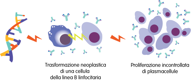 Proliferazione di plasmacellule e immunoglobuline – Mieloma Multiplo – Fondazione GIMEMA