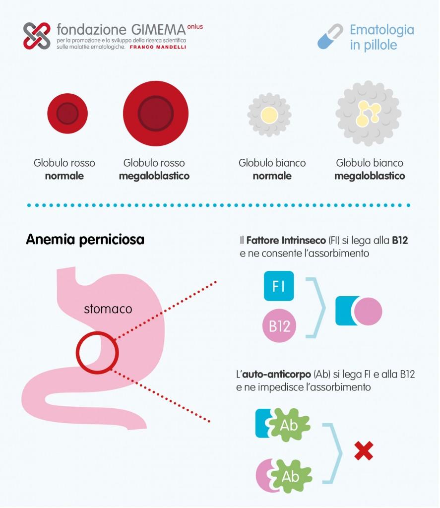 Anemia vitamina B12 e Folati – Ematologia in Pillole – Fondazione GIMEMA