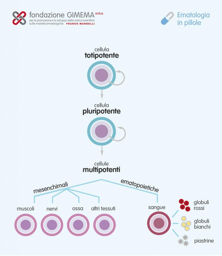 La cellula staminale – Ematologia in Pillole – Fondazione GIMEMA