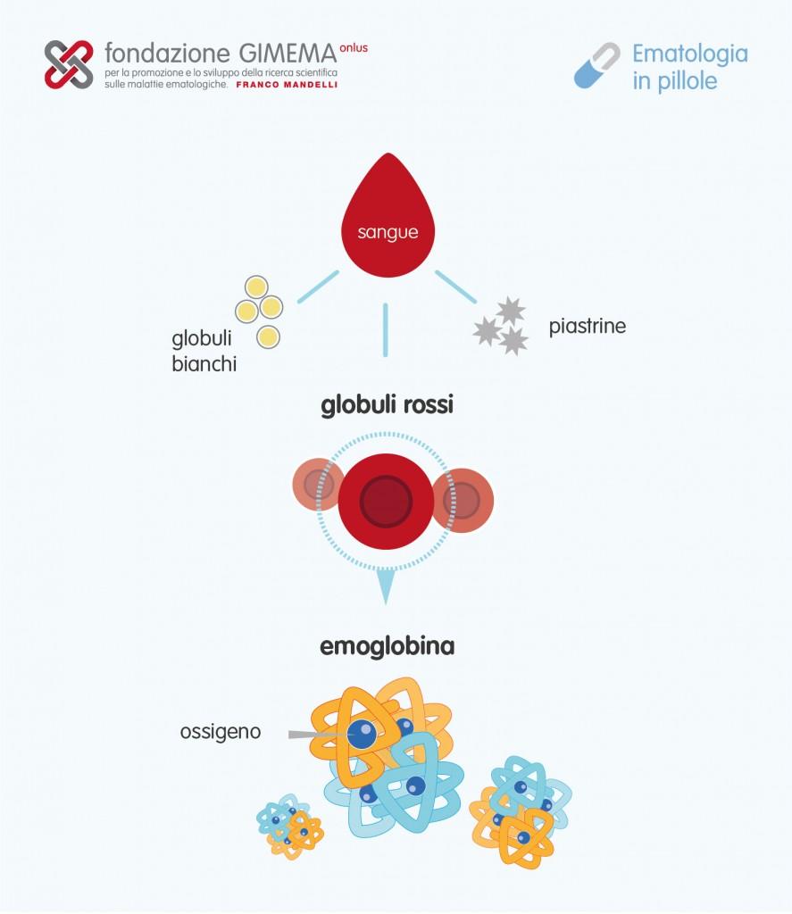I globuli rossi – Ematologia in Pillole – Fondazione GIMEMA