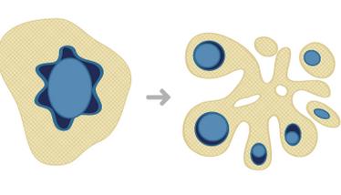 apoptosi2