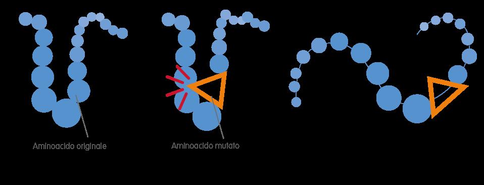 Alterazione di una proteina – Neolpasie Mieloproliferative Croniche – Fondazione GIMEMA