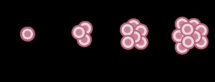 Proliferazione di una cellula staminale – Sindromi Mielodisplastiche – Fondazione GIMEMA