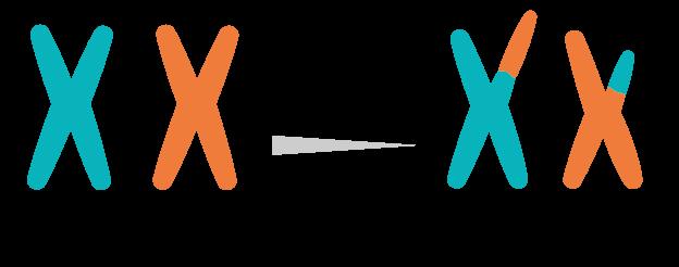 Traslocazione cromosomica – Leucemie Acute – Fondazione GIMEMA