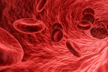globuli rossi sintetici